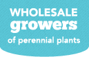 Wholesale Growers of Perennial Plants